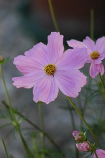 free flower picture 3