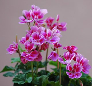 free flower picture 2
