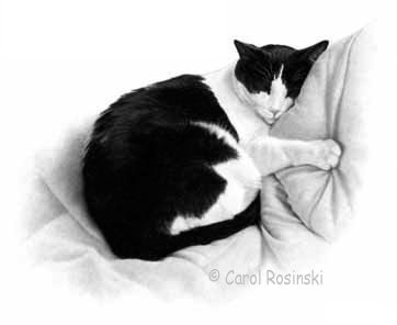 """how to draw a cat, in this case """"buddy"""" by Carol Rosinski"""