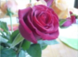 how to draw a rose, blurring or ...squinting your eyes!