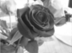 how to draw a rose, balck and white for finding the tones