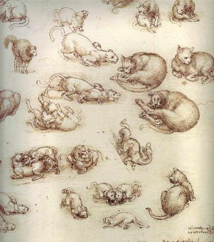 Leonardo da Vinci cats, learn how to draw a cat from Leonardo!