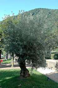 free tree picture 9