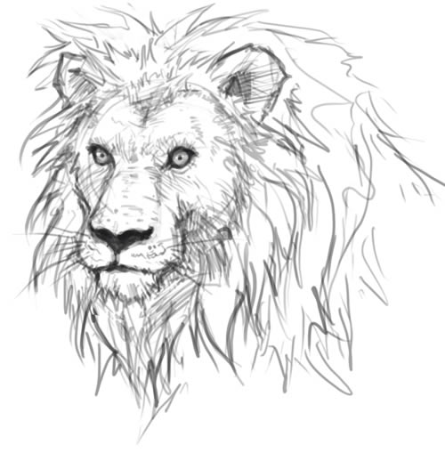 final result of lions head