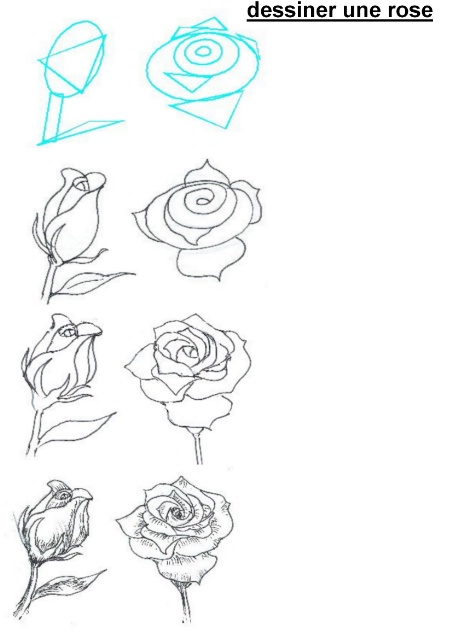 hot to draw roses