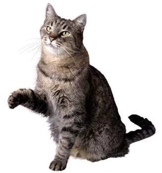 free cat picture from a royalty free cd-rom bought long time ago