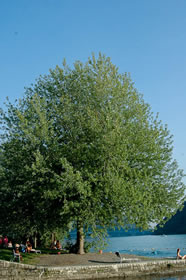 free tree picture 2
